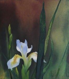 Susan's Iris